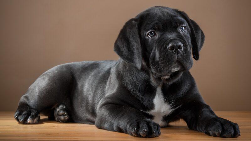 Ci portiamo il cagnolino?